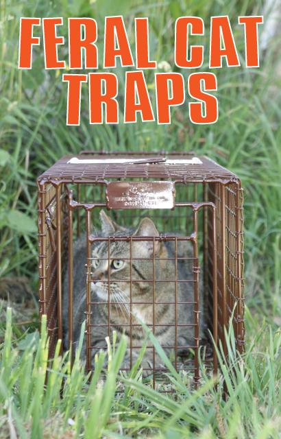 Feral Cat Traps