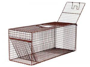 36RD - Bird Trap