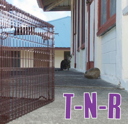 Trap-Neuter-Return